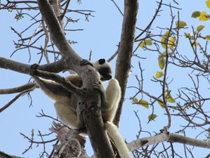 13 Days Madagascar Wildlife Tour and Camping Safari
