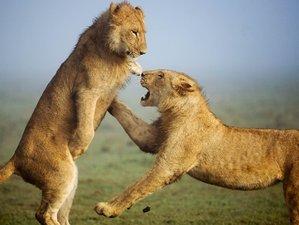 4 Days Combi Safari Masai Mara and Lake Nakuru National Park, Kenya