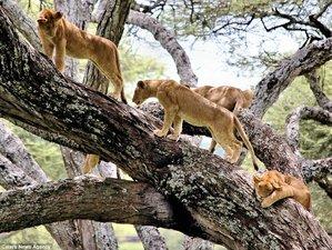 2 Days Camping Safari in Tanzania