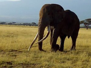 8 Days Exciting Safari and Beach Holiday in Kenya