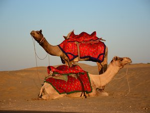 8 Days Rajasthan Desert Festival Guided Motorcycle Tour