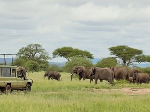 3 Days Highlights of Lake Manyara, Ngorongoro, and Tarangire Camping Safari in Tanzania