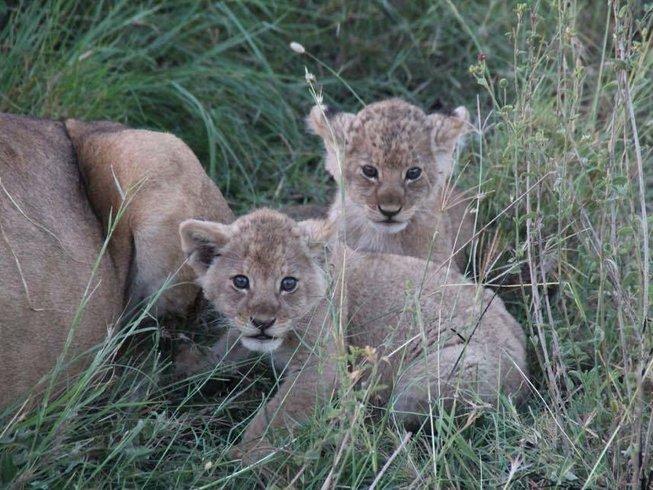 7 Days Animals & Hiking Tanzania Safari