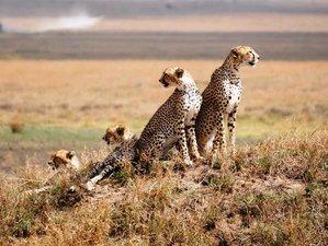 4 Days the Great Serengeti and Ngorongoro Safari in Tanzania