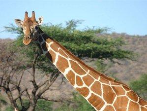 5 Days tembea Safari in Lake Nakuru and Maasai Mara, Kenya