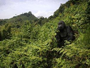 2 Days African Mountain Gorilla Trekking Safari in Rwanda