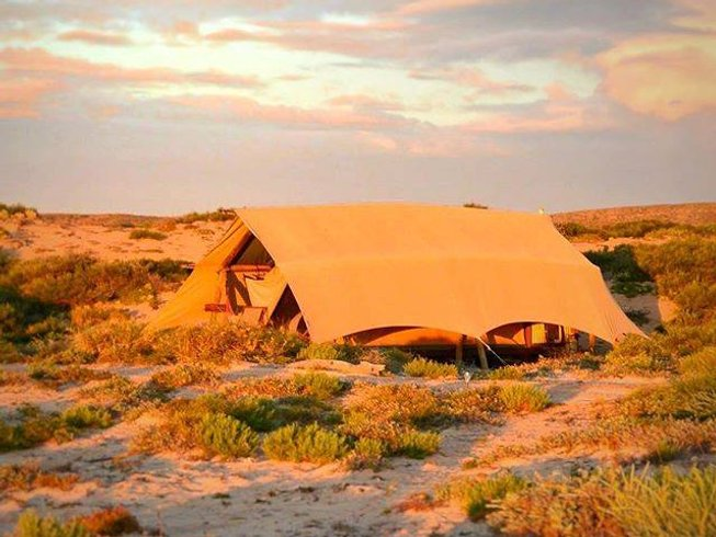"6 Days ""Salted Souls"" Eco-Safari Tour, Yoga, and Meditation Retreat in Ningaloo Reef, Australia"