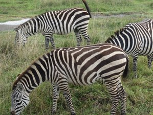 3 Days Tarangire National Park, Lake Manyara National Park and Ngorongoro Crater Safari in Tanzania