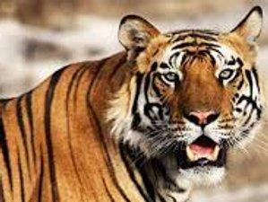 4 Day Wildlife Tour in Bardia National Park, Bardiya