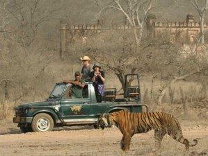 5 Day Tiger Trails Wildlife Safari in India
