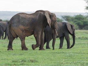 4 Days Tarangire, Lake Manyara, and Ngorongoro Crater Wilderness Mid-Range Safari in Tanzania