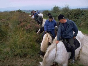 8 Day All Levels An Sibin Residential Horse Riding Holiday in Whitegate, County Clare