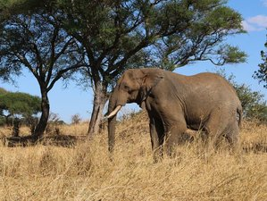 5 Days Exciting Camping Safari in Tanzania