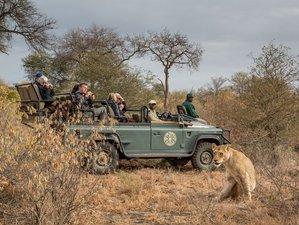 4 días en un cautivador safari en Timbavati, Sudáfrica