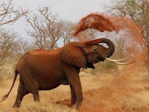 6 Days Northern Tanzania Safari Tour
