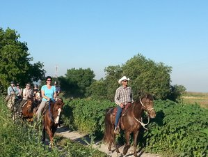 7 Days The Land of Galilee Horse Riding Trail Holiday in Haifa, Israel