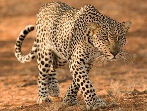 2 Days Amazing Camping Safari in Maasai Mara National Reserve, Kenya