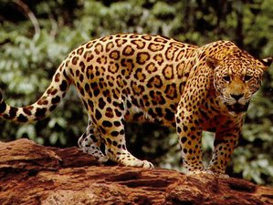 7 Day Guided Wildlife Tour in Manu National Park, Cusco