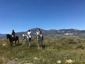 5 Day Exceptional Riding in Sierra de las Nieves Natural Park, Andalusia