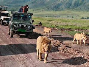6 Days Northern Circuit Camping Safari in Tanzania