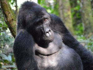 3 Days Gorilla Tracking Safari in Uganda