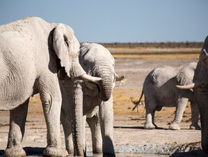 7 Days of Wildlife and Yoga in Namibia