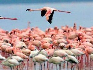 5 Day Kenya Budget Private Safari Holiday in Lake Naivasha, Nakuru, and Masai Mara