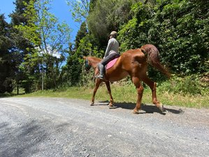 3 Day Horse Therapy, Scuba Diving and Yoga Retreat in Andalusia