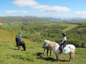 8 Days Beginner Horse Riding Holiday in Northern Portugal