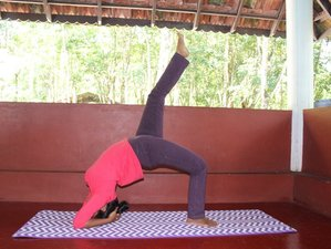 24 Days 200-Hour Yoga Teacher Training in Palampur, India