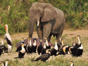 2 Days Exciting Wildlife Safari in Queen Elizabeth National Park, Uganda