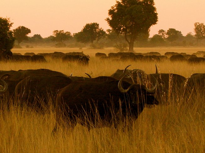 14 Days Budget African Safari in South Africa, Mozambique, and Swaziland