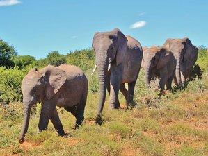 6 Days Masai Mara Wilderness Safari in Kenya