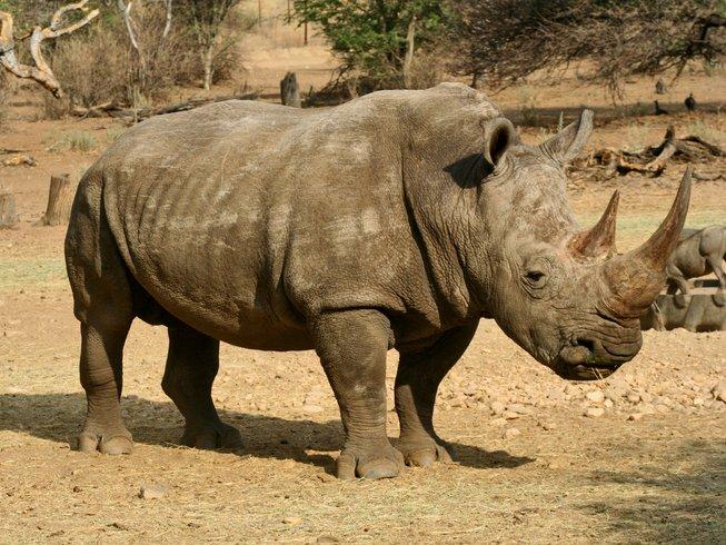 5 Days Kruger National Park Safaris and Wildlife Tour