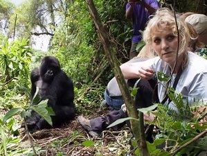 3 Days Fascinating Gorilla Safari in Bwindi Impenetrable National Park, Uganda