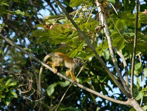 3 Day The Encounter Tour Safari in Tamshiyacu Tahuayo Communal Regional Conservation Area, Loreto
