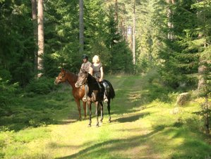2 Days Cozy and Wilderness Trail Horse Riding Tour and Farm Stay in Västra Götaland, Sweden