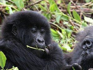 6 Days All Inclusive Safari in Uganda