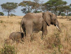 6 días de safari por el Tarangire, Serengueti, Ngorongoro y el lago Manyara en Tanzania
