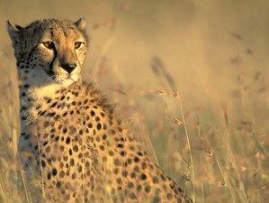 4 Days Amazing Safari in Maasai Mara and Lake Nakuru, Kenya