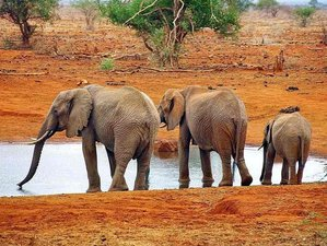 4 Days Wildlife Safari and Beach Holiday in Kenya