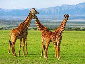6 Days Lake Manyara, Serengeti, and Ngorongoro Crater Safari in Tanzania