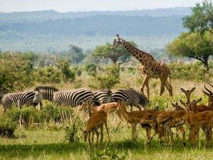 5 días de safari en los parques nacionales de Mikumi y Ruaha en Tanzania