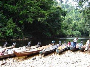 3 Day Wildlife Tour in Taman Negara, Malaysia