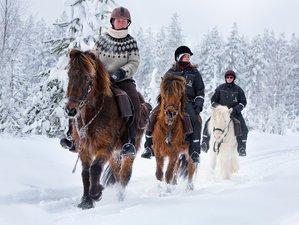 5 Days Adventurous Winter Horse Riding Holiday in Svansele, Swedish Lapland