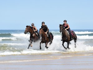 8 Day Endurance, Castles, and Vineyards Horse Riding Holiday in Mimizan, Landes
