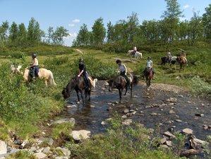 5 Days Horseback Riding Holiday on Icelandic Horses in Swedish Lapland