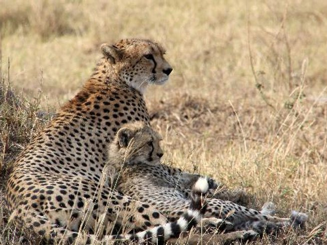 5 Days Cultural and Classic Tanzania Safari