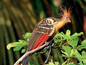 4 Day Adventure Wildlife Tour in the Amazon Jungle, Ecuador