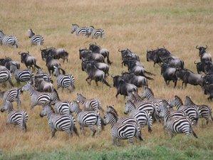 4 Days Short and Comfortable Taste of Kenya Safari in Lake Nakuru and Masai Mara